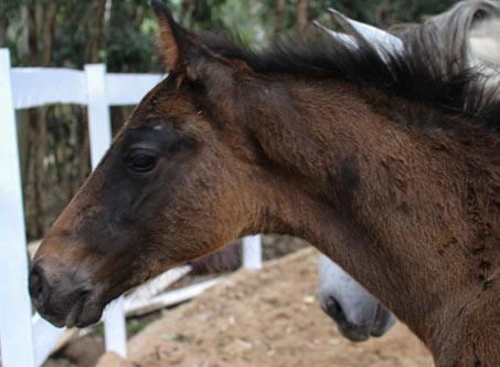 Sales Horses: Contendra