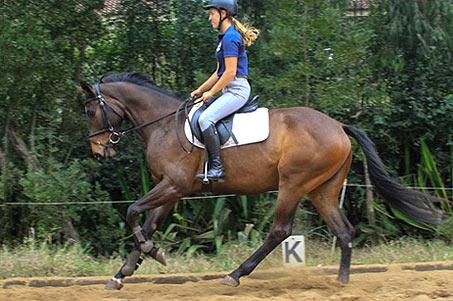 Competitive Horse Breeding Galana