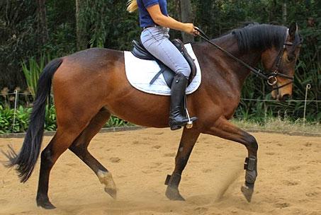 Tonto Sale Horse