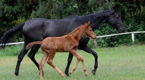 Nairobi Kenya Horses