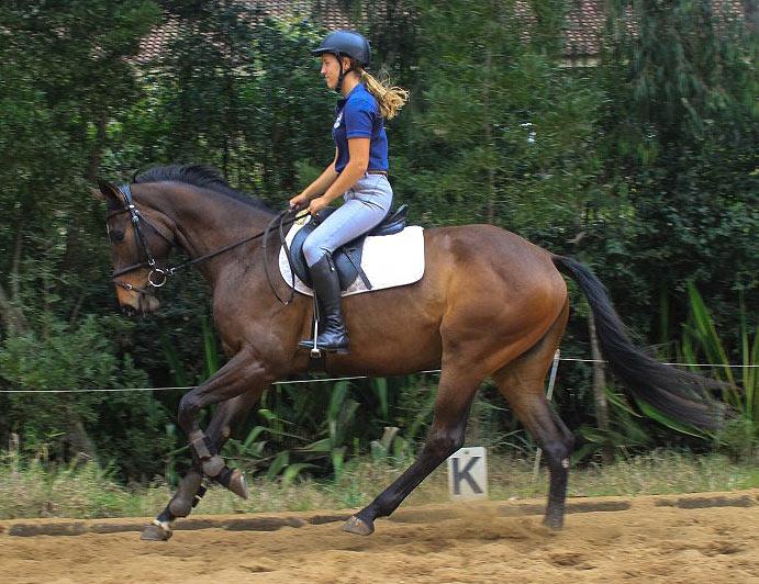 Competitive Horse Breeding Galana-canter