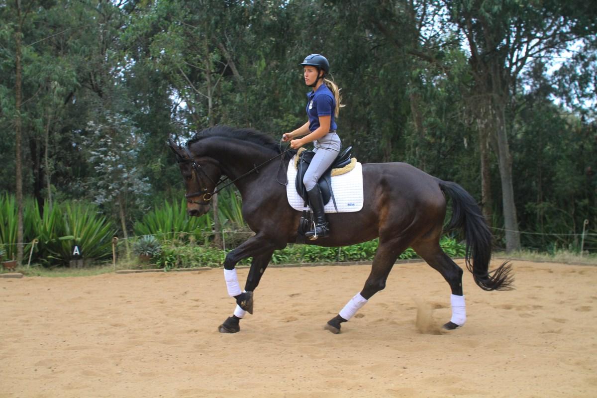 Competitive Horse Breeding:Summerbird Canter1