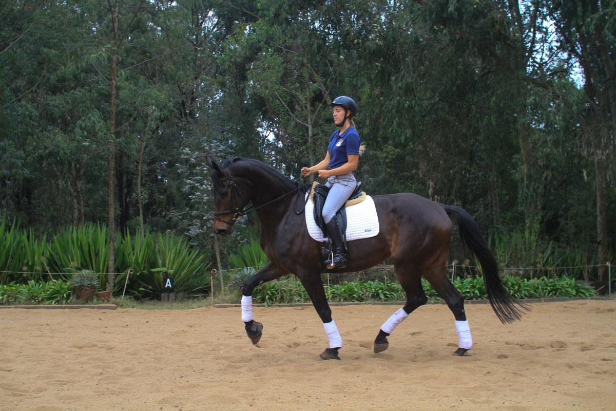 Competitive Horse Breeding: Summerbird