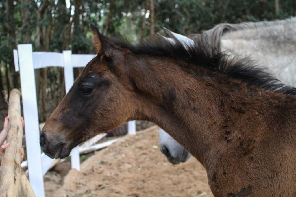 Sales Horse: Contendra