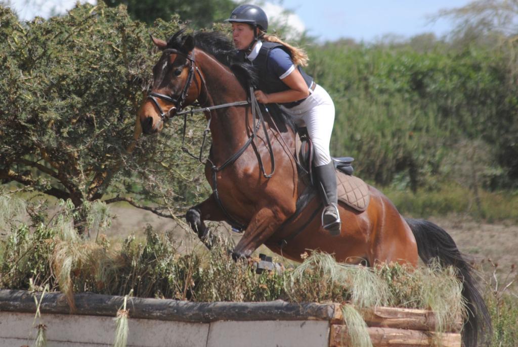 Sales Horse: Tonto Jumping