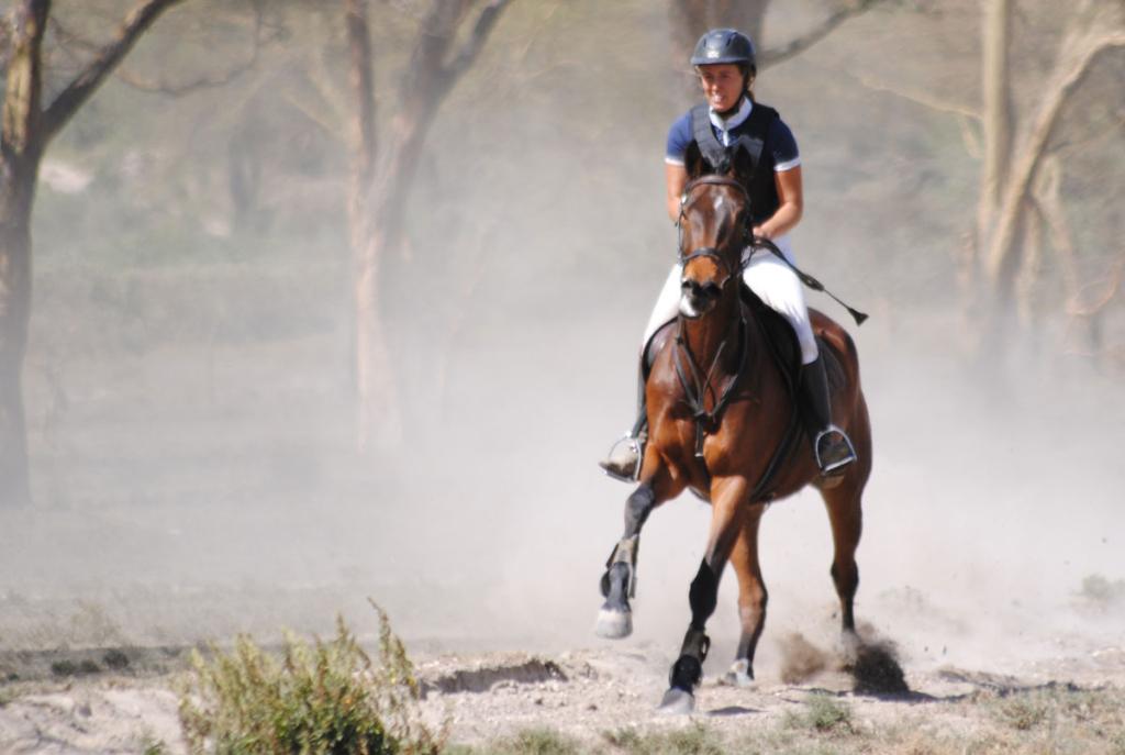 Sales Horse: Tonto